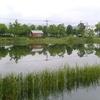 「マダム倶楽部」活動報告 大雨の後の遊水地の状況は鏡面になっていてきれいでした 7月7日