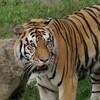 子連れで楽しむ!天王寺動物園に行こう!2017年9月の記録