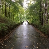 雨の紅葉「欲」ラン