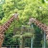 休日は、子供たちと埼玉県こども動物自然公園へ( ¨̮⋆)