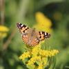 11/13・まだまだ元気な秋の蝶 〜 気温がぐんぐん上昇してたくさんの蝶が楽しめました