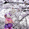 気になる桜ちょっとだけ立ち寄り@荒子川公園