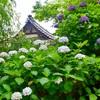 鎌倉・葛原岡神社と源氏山公園のあじさい散策