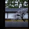 京都・花園 - 妙心寺 龍泉菴の白梅