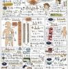 「健康情報しらべ隊」第4回「乳酸菌 なぜお菓子に?」