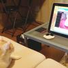 YouTubeのネコ動画、ネコによって観られる。