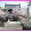 桜も見納め? 0402