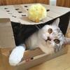 猫に遊んでもらう