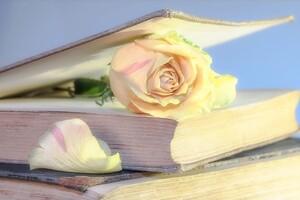 通訳者人生の道をつけてくれた永遠のバイブル【通訳者・翻訳者の本棚から】