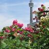 横浜の5月は薔薇