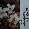 2月2日 誕生日の花と花言葉