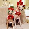メリークリスマスとconfiture