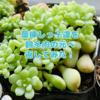 たにログ186 【ばら撒き】葉挿しっ子で丼作り!
