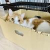 るるちゃんと暮らしてから見なくなった、大好きな猫のお世話を忘れる夢について。