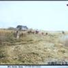 1945年4月30日 『海兵隊の南下』