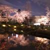 六本木ヒルズの夜桜・3月29日(東京)