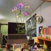 オフィスの花_2021.5