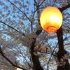 嬉しい春のライトアップ