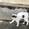 宮古島旅行記その2・2日目の朝は宿の周囲を散策