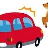 運転中に動物を轢いてしまった場合は犯罪になる?