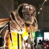 国立科学博物館 昆虫展