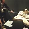 特別展「発掘!モンゴル恐竜化石展」