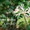 秋分/Autumn equinox/二十四節気...春分への折り返し地点となりました
