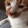 迷子猫探し Q&A:よくメールでお問い合わせいただくことについて<編集後記No.38>