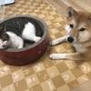 猫と犬を一緒に飼ってみて、どっちのお世話が大変かを考える
