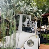 人気のおしゃれ植物園芸店「SOLSO FARM(ソルソファーム)」に行ってみた感想