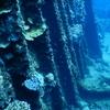 防水デジカメNikon COOLPIX W300 おまかせシーンモード作例集@小笠原諸島でダイビング!