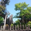 大見神社のクスノキ