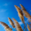 空を見つめて風を見る 春夏秋と冬の風