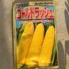 作物No28 ゴールドラッシュの播種。トウモロコシの6月中旬まきに挑戦!