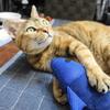 6月前半の #ねこ #cat #猫 どらやきちゃんB
