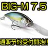 【Megabass】サトシン監修のMAX7.5mのスーパーディープクランク「BIG-M 7.5」通販予約受付開始!