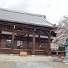 宥清寺の見頃の桜を撮影!