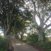 幻想的な木々のトンネル、ダークヘッジに行ってきた。〜北アイルランドの絶景スポット〜