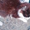 【写真あり】名古屋の猫寺で撮った長毛種のネコちゃん写真まとめ!
