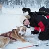 【HIS添乗員ツアー・フィンランド&ドイツ・3】初体験の犬ぞり!