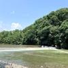 子供の夏休みはプール・海より川遊びがおすすめ