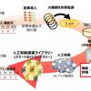 蛋白質の機能改変の効率化