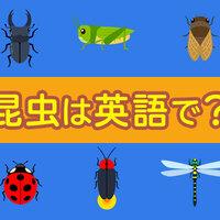 昆虫のことを英語で話してみよう!
