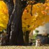 銀杏の木の下で…