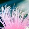 鶴見緑地へ夏の花を撮りに行くと、カモの雛が居た