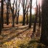 【一日一枚写真】秋【一眼レフ】