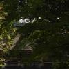 三井寺の紅葉 1