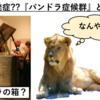 【コラム】猫で発症??『パンドラ症候群』とは?