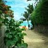 一枚の写真から・・ラニカイの小道