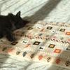 わが家が初めて買ったNウォームはシートクッション。猫とお昼は至福のとき!?